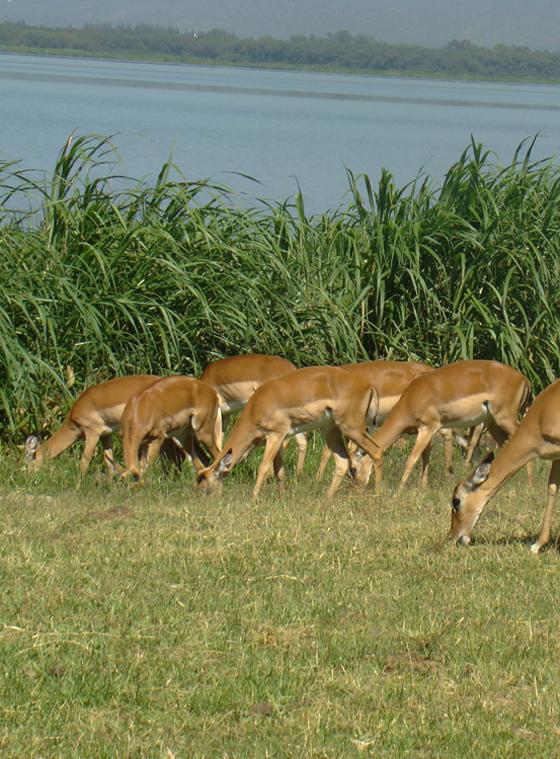Impala-sanctuary