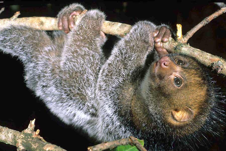 Kakamega Forests